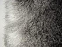 γούνα Στοκ εικόνα με δικαίωμα ελεύθερης χρήσης