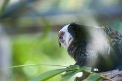 Γούνινος πίθηκος στοκ φωτογραφίες