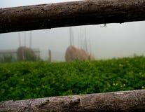 Γούρνα άποψης ο ιστός αράχνης Στοκ φωτογραφίες με δικαίωμα ελεύθερης χρήσης