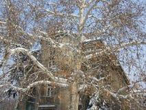 Γούρνα αρχιτεκτονικής το δέντρο Στοκ Φωτογραφία