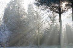 Γούρνα ηλιαχτίδων το δάσος Στοκ φωτογραφίες με δικαίωμα ελεύθερης χρήσης