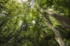 Γούρνα ηλιοφάνειας οι κορυφές δέντρων Στοκ Εικόνες