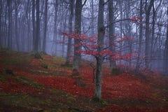 Γούρνα ιχνών ένα δάσος φθινοπώρου με την ομίχλη Στοκ φωτογραφία με δικαίωμα ελεύθερης χρήσης