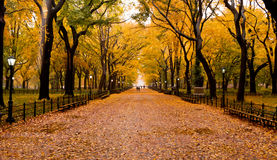 Γούρνα ιχνών φθινοπώρου το πάρκο Στοκ Εικόνες