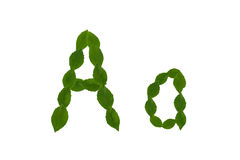 Γράμμα Α, αλφάβητο που γίνεται από τα πράσινα φύλλα Στοκ φωτογραφία με δικαίωμα ελεύθερης χρήσης