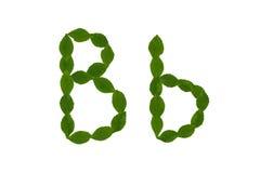 Γράμμα Β, αλφάβητο που γίνεται από τα πράσινα φύλλα Στοκ Εικόνα