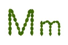 Γράμμα Μ, αλφάβητο που γίνεται από τα πράσινα φύλλα Στοκ Φωτογραφία