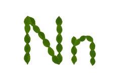 Γράμμα Ν, αλφάβητο που γίνεται από τα πράσινα φύλλα Στοκ εικόνες με δικαίωμα ελεύθερης χρήσης