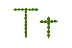 Γράμμα Τ, αλφάβητο που γίνεται από τα πράσινα φύλλα Στοκ φωτογραφίες με δικαίωμα ελεύθερης χρήσης