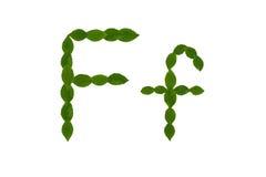 Γράμμα Φ, αλφάβητο που γίνεται από τα πράσινα φύλλα Στοκ φωτογραφία με δικαίωμα ελεύθερης χρήσης