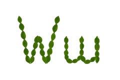 Γράμμα W, αλφάβητο που γίνεται από τα πράσινα φύλλα Στοκ εικόνα με δικαίωμα ελεύθερης χρήσης