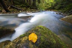 Γρήγορα διατρέχοντας του άγριου πράσινου ρεύματος ποταμών βουνών δασικού με το κρύσταλλο - καθαρίστε το νερό και το φωτεινό κίτρι στοκ φωτογραφία με δικαίωμα ελεύθερης χρήσης