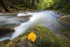 Γρήγορα διατρέχοντας του άγριου πράσινου ρεύματος ποταμών βουνών δασικού με το κρύσταλλο - καθαρίστε το νερό και το φωτεινό κίτρι στοκ εικόνα