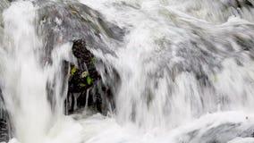 Γρήγορα ρέοντας νερό απόθεμα βίντεο