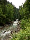 Γρήγορα τρέχοντας ποταμός στο δάσος Στοκ φωτογραφία με δικαίωμα ελεύθερης χρήσης