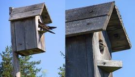 Γρήγορες ζωές πουλιών σε ένα birdhouse Στοκ Φωτογραφία