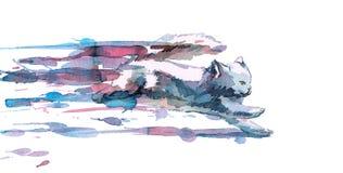 Γρήγορη γάτα απεικόνιση αποθεμάτων