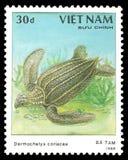 γρήγορος μέγιστος κόσμος χελωνών θάλασσας leatherback σύγχρονος στοκ εικόνα