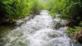 Γρήγορος ποταμός βουνών που ρέει κάτω φρέσκο σε πράσινο απόθεμα βίντεο