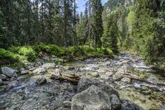 γρήγορος ποταμός βουνών Στοκ εικόνες με δικαίωμα ελεύθερης χρήσης