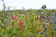 Γρήγορο άνθισμα των ετερόκλητων άγριων φυτών ποικιλίας στοκ εικόνες