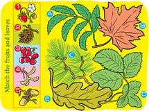 Γρίφος για να ταιριάξει με τα φύλλα και τα φρούτα στοκ φωτογραφίες με δικαίωμα ελεύθερης χρήσης