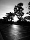 Γραμμές και δέντρο κυκλοφορίας μαύρο λευκό Στοκ Εικόνα