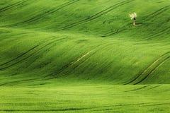Γραμμές και κύματα με τα δέντρα την άνοιξη Στοκ φωτογραφίες με δικαίωμα ελεύθερης χρήσης
