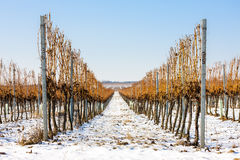 γραμμές δύο τοπίων λόφων λόφων χειμώνας του χωριού αμπελώνων Στοκ Εικόνα