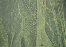 Γραμμές Nazca: Κοχύλια Στοκ φωτογραφία με δικαίωμα ελεύθερης χρήσης