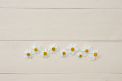 Γραμμή άσπρων ισπανικών λουλουδιών βελόνων Στοκ Εικόνες