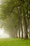 Γραμμή δέντρων που εξαφανίζονται στην ομίχλη Στοκ φωτογραφία με δικαίωμα ελεύθερης χρήσης