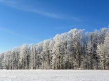 Γραμμή δέντρων που ψαρεύεται παρουσιάζοντας πάγο ομίχλης χιονιού που καλύπτει τους κλάδους ενάντια Στοκ Εικόνες