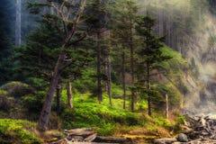 Γραμμή ακτών του Forrest Στοκ Εικόνες