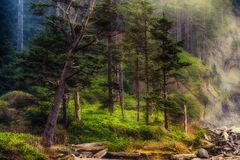 Γραμμή ακτών του Forrest Στοκ Φωτογραφίες