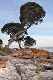 Γραμμή ακτών Treed στο δύσκολο κόλπο αποθηκών Στοκ Εικόνες