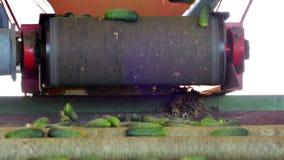Γραμμή για την επεξεργασία των ακατέργαστων αγγουριών φιλμ μικρού μήκους
