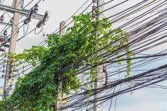 Γραμμή ηλεκτρικής δύναμης με τις εγκαταστάσεις αναρριχητικών φυτών Στοκ Φωτογραφία