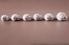 Γραμμή θαλασσινών κοχυλιών σε έναν πίνακα Στοκ φωτογραφία με δικαίωμα ελεύθερης χρήσης