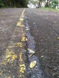 Γραμμή κίτρινη Στοκ Εικόνες