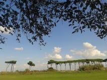 Γραμμή μεσογειακών πεύκων στην απόσταση με στα φύλλα πρώτου πλάνου των δέντρων σε ένα πάρκο πόλεων της Ρώμης Ιταλία στοκ εικόνες