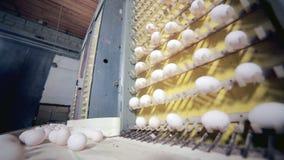 Γραμμή παραγωγής αυγών στη δράση στο φάρμα πουλερικών απόθεμα βίντεο