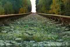 Γραμμή τραίνων στο δάσος στοκ εικόνες