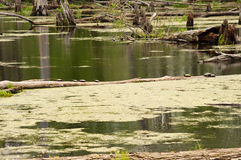 Γραμμή χελωνών Στοκ φωτογραφίες με δικαίωμα ελεύθερης χρήσης