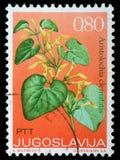 Γραμματόσημο που τυπώνεται στη Γιουγκοσλαβία Στοκ φωτογραφίες με δικαίωμα ελεύθερης χρήσης