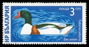 Γραμματόσημο σειράς υδρόβιων πουλιών ` της Βουλγαρίας `, 1976 Στοκ φωτογραφία με δικαίωμα ελεύθερης χρήσης