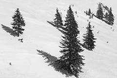 Γραπτά πεύκα εικόνων mountainside Στοκ εικόνα με δικαίωμα ελεύθερης χρήσης