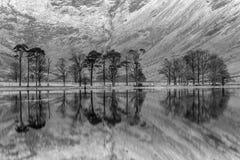 Γραπτές ήρεμες αντανακλάσεις των δέντρων πεύκων σε Buttermere στην περιοχή λιμνών, UK Στοκ φωτογραφίες με δικαίωμα ελεύθερης χρήσης