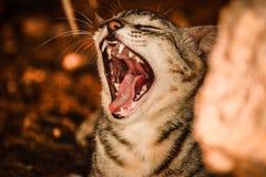 Γραπτές γάτες στοκ φωτογραφία