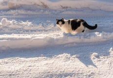 Γραπτές στάσεις γατών στη μέση του καλυμμένου δρόμος πνεύματος στοκ φωτογραφίες με δικαίωμα ελεύθερης χρήσης